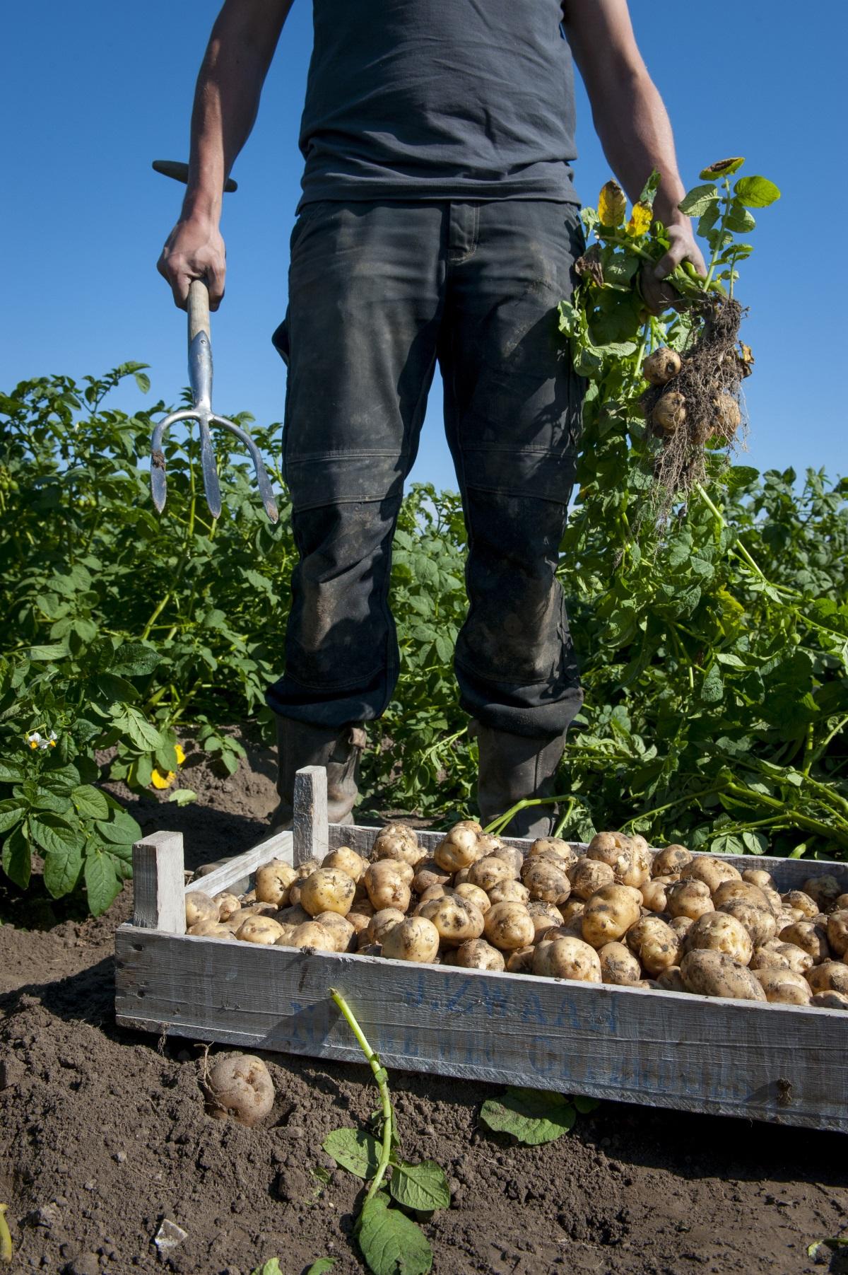 cyfarfu koos zwaan â kist opperdoezer ronde aardappelen rijk aan verhalen 28 06 2018 3